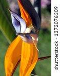 Bird Paradise Sydneys Centennial Park - Fine Art prints