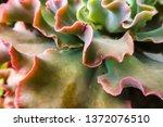 Solitary Succulent Plant ...