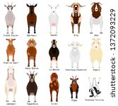 goats chart with breeds name | Shutterstock .eps vector #1372093229