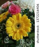 yellow gerbera or barberton... | Shutterstock . vector #1372216406
