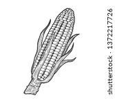 corn maize vegetable plant on... | Shutterstock .eps vector #1372217726