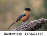 a mountain bird | Shutterstock . vector #1372218539
