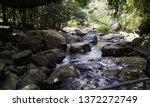 beautiful natural garden | Shutterstock . vector #1372272749