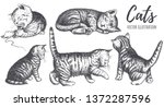 Stock vector collection of cats hand drawing the cat plays sleeps sits runs curiosity pose kitten vector 1372287596