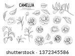 outline of camellia flowers.... | Shutterstock .eps vector #1372345586