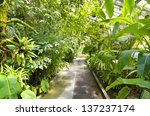 Tropical Plants In A Greenhous...