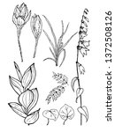 a set of hand drawn sketches ... | Shutterstock .eps vector #1372508126