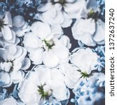 botanical backdrop  nature and... | Shutterstock . vector #1372637240