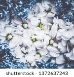 botanical backdrop  nature and... | Shutterstock . vector #1372637243