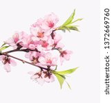 branch of peach tree with...   Shutterstock . vector #1372669760