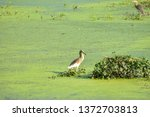 A Migratory Bird At The...
