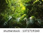 background natural garden green | Shutterstock . vector #1372719260