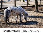 horse animal equestrian rider... | Shutterstock . vector #1372723679