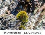 Moss Growing On A Rock