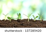 green seedling growing from... | Shutterstock . vector #137285420