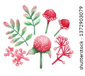 watercolor collection of red... | Shutterstock . vector #1372903079