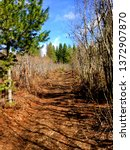 Beaten path along Pee Wee Trail in North Idaho with bright blue sky, clouds trees and other colorful scenery