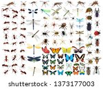vector  isolated  set of... | Shutterstock .eps vector #1373177003