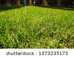 background of green grass in... | Shutterstock . vector #1373235173