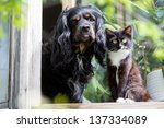 Stock photo cat and dog 137334089