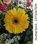 detail of gerbera daisies ... | Shutterstock . vector #1373367839