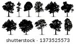 tree silhouette isolated on... | Shutterstock .eps vector #1373525573