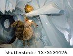 paris  circa january 2014 ... | Shutterstock . vector #1373534426