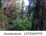 beautiful view of trees... | Shutterstock . vector #1373569970