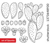 Vector Set With Outline Cactus...