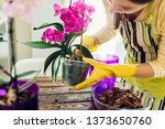woman transplanting orchid into ... | Shutterstock . vector #1373650760