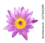 Purple Water Lilly On Isolate...