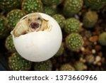 africa spurred tortoise are... | Shutterstock . vector #1373660966