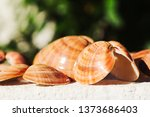 the picture shows shells from... | Shutterstock . vector #1373686403