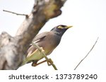 birds that are perched on the... | Shutterstock . vector #1373789240