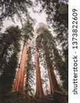 Sequoia National Park Gian...