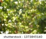 bokeh green light blurred... | Shutterstock . vector #1373845160