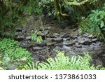 rainforest stream franz josef... | Shutterstock . vector #1373861033
