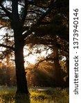 sunbeam shedding light on... | Shutterstock . vector #1373940146