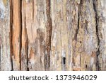 wood texture background surface ... | Shutterstock . vector #1373946029