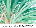 beautiful tropical plants  | Shutterstock . vector #1374107633