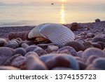 Two Seashells Against The...