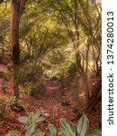 Small photo of MOUNT LOFTY, SA, AUSTRALIA - 19 APR 2019: Mount Lofty Botanic Gardens with spectacular colours during autumn.