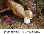 africa spurred tortoise are... | Shutterstock . vector #1374354389
