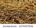 Dry Straw Background Of Reeds...