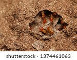 snouted termites in the nest. a ...   Shutterstock . vector #1374461063