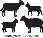 Sheep And Lamb Vector Set Of...