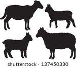 Sheep And Lamb Vector Set Of...