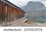 Cat At Hallstatt Lake Side