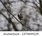 moody scene of a black capped... | Shutterstock . vector #1374644129