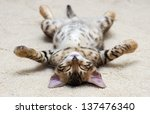 Stock photo  kitten sleeps 137476340